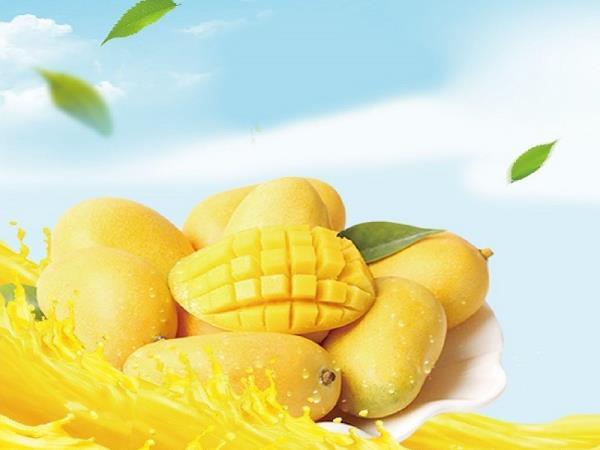 吃對芒果好健康【六龜金煌芒果】